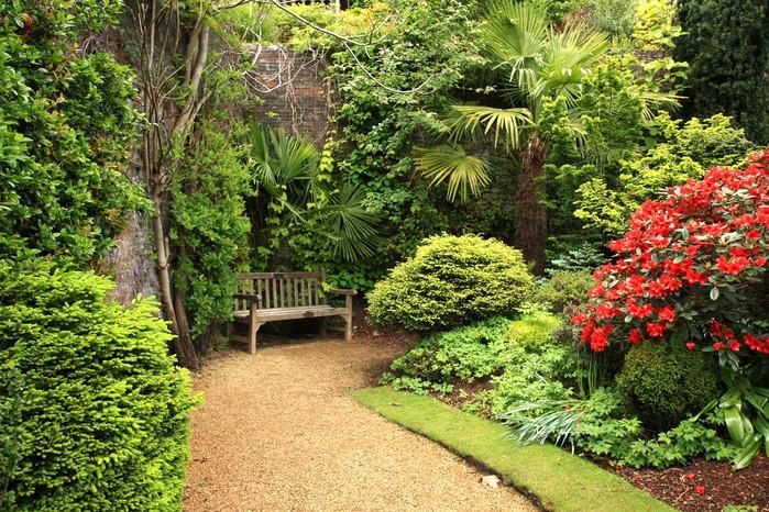 Дизайн: растения для вашего сада
