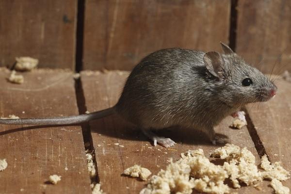 Покупаем ультразвуковые отпугиватели мышей и насекомых.