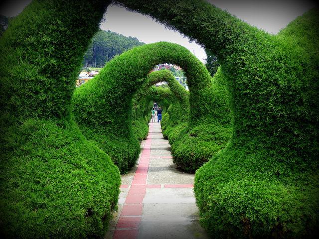 Декоративные сады: фигурная стрижка