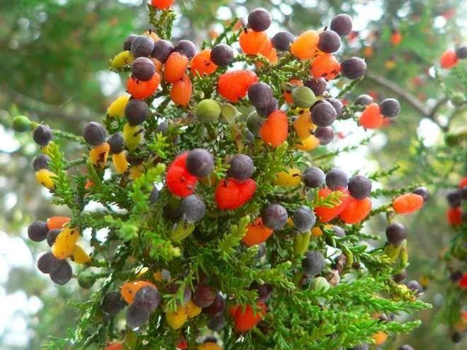 мульти дерево