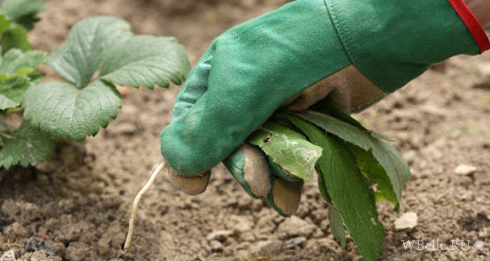 Избавляемся от сорняков: сэкономьте силы и время