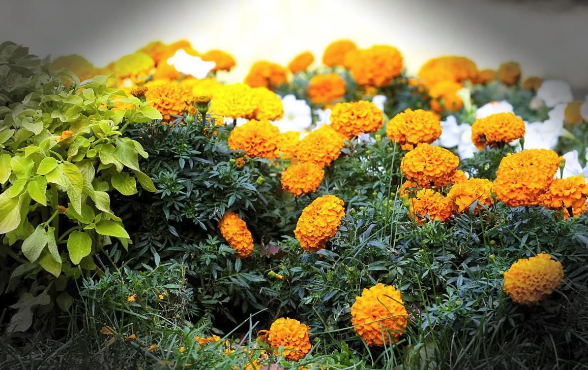 Мастерим клумбу: оригинальные решения для огорода и садового участка