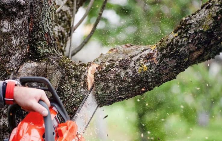 Как спилить высокорастущую ветку дерева: оригинальное и безопасное решение