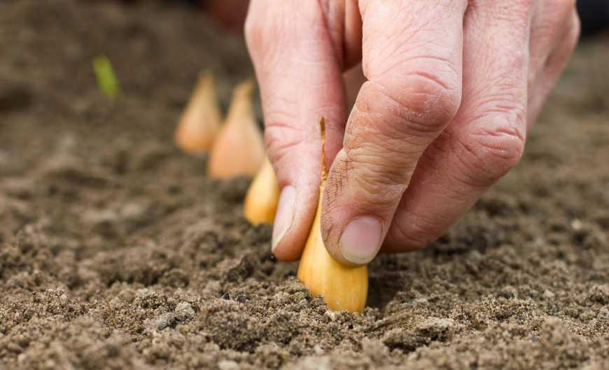 Шаблон для эффективной посадки лука: делаем своими руками