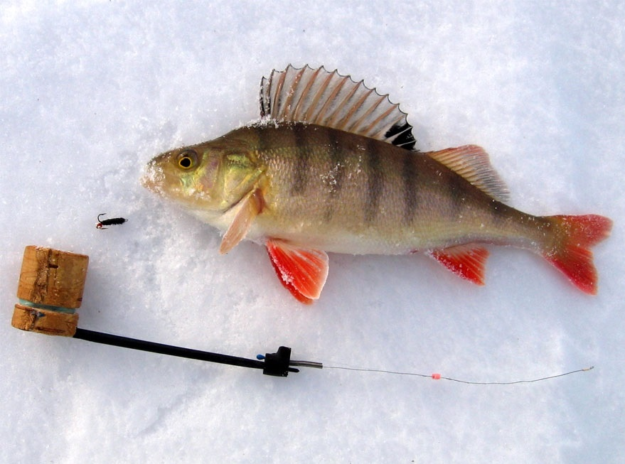 5 самоделок для зимней рыбалки