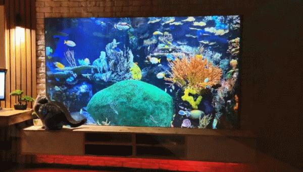 Как и из чего недорого сделать 100 дюймовый экран для проектора