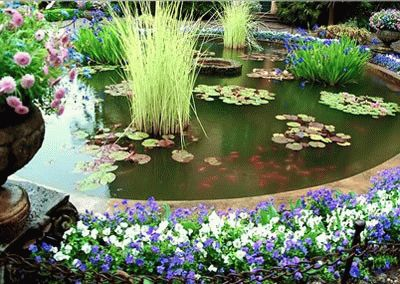 Декоративный пруд красота и комфорт своими руками